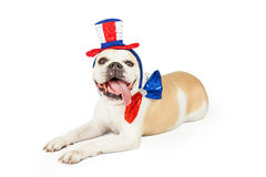 Happy Fourth Of July Bulldog Laying Royalty Free Stock Photography