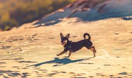 Happy free dog Stock Photos
