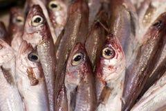 Happy fresh fish stock photo