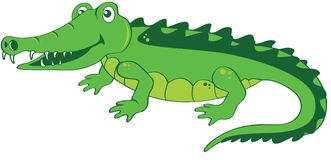 Happy friendly Crocodile. Happy and friendly Crocodile wants to play with you. Funny vector illustration. Cartoon character crocodile. White background with a Stock Image