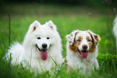 Happy friends dogs. Portrait of two friends dogs for a walk in the park, one summer day Royalty Free Stock Photos