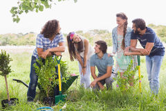 Happy friends gardening for the community. On a sunny day royalty free stock photos