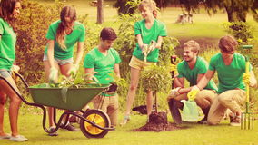 Happy friends gardening for the community stock video