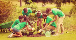 Happy friends gardening for the community stock video footage