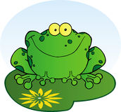 Happy frog on a lilypad Stock Image