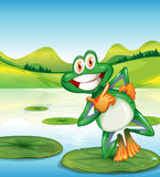 A happy frog standing above the waterlily Royalty Free Stock Photos