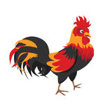 Happy full color rooster crowing Stock Photos