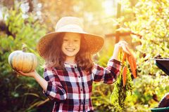 Happy funny child girl in farmer hat and shirt playing and picking autumn vegetable harvest. In sunny garden. Growing organic carrots and pumpkins Royalty Free Stock Photos