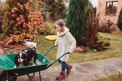 Happy funny child girl riding her dog in wheelbarrow in autumn garden, candid outdoor capture Royalty Free Stock Images