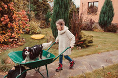 Happy funny child girl riding her dog in wheelbarrow in autumn garden, candid outdoor capture stock images