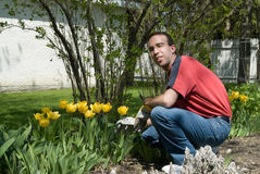 Happy Gardener. A happy gardener weeding the flower garden Stock Photography