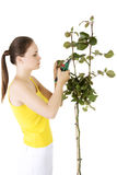 Happy gardener using pruning scissors. Royalty Free Stock Image