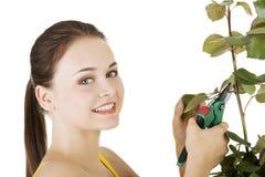 Happy gardener using pruning scissors. Stock Image