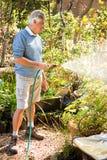 Happy gardener watering plants from hose at garden Stock Photos