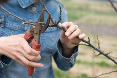 Happy gardener woman using pruning scissors in orchard garden. Pretty female worker portrait Stock Photos