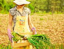 Happy gardener working Stock Images