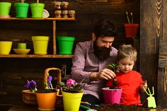 Happy gardeners with flowers. Family day. Greenhouse. Flower care watering. Soil fertilizers. Father and son. man and. Happy gardeners with flowers. Family day stock image