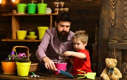 Happy gardeners with spring flowers. bearded man and little boy child love nature. Flower care watering. Soil stock photography