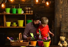 Happy gardeners with spring flowers. Family day. Greenhouse. bearded man and little boy child love nature. Father and royalty free stock image