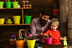 Happy gardeners with spring flowers. Family day. Greenhouse. Flower care watering. Soil fertilizers. Father and son royalty free stock images