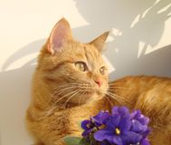 Happy ginger cat lying in the sun Stock Photo