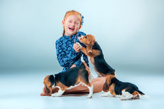 The happy girl and beagle puppies on gray background Royalty Free Stock Photos