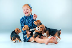 The happy girl and beagle puppies on gray background Stock Image