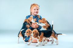 The happy girl and beagle puppies on gray background Stock Photography