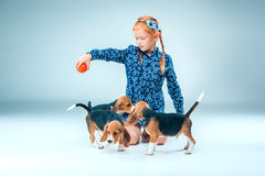 The happy girl and beagle puppies on gray background Stock Photo