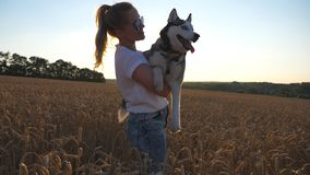 Happy girl with blonde hair carrying on hands her siberian husky dog among the spikelets at meadow. Young woman in
