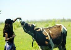 Happy girl feeding cow royalty free stock photo
