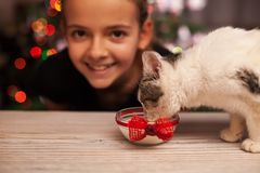 Happy girl with her rescued kitten at christmas time Royalty Free Stock Photography
