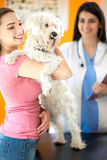 Happy girl and Maltese dog in vet clinic. Happy girl and Maltese dog because of good medical exam results in vet clinic Royalty Free Stock Image