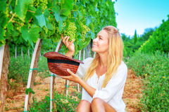 Happy girl picking grapes Stock Photography