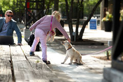 Happy Girl  playing with her Dog  in the City. Father working wih laptop behind Royalty Free Stock Photo
