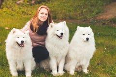 Happy girl sitting with white Samoyed dogs royalty free stock photo