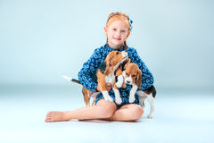 The happy girl and two beagle puppie on gray background. The happy girl and the two beagle puppie on gray background Stock Images