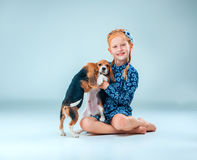 The happy girl and two beagle puppie on gray background. The happy girl and the two beagle puppie on gray background Stock Photo