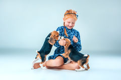 The happy girl and two beagle puppie on gray background. The happy girl and the two beagle puppie on gray background Royalty Free Stock Image