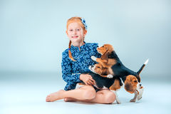 The happy girl and two beagle puppie on gray background. The happy girl and the two beagle puppie on gray background Stock Image