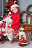 Happy girl with two puppies Golden Retriever on a background of Christmas tree. Happy girl 6 years old with gray-green eyes,brunette hair braided in two pigtails Royalty Free Stock Photos