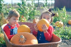 Happy girls sitting inside wheelbarrow at field pumpkin patch Royalty Free Stock Photography