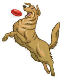 Happy golden retriever dog playing flying disc Stock Images
