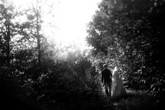 Happy gorgeous bride and stylish groom holding hands and walking. In sunny forest park Stock Photos