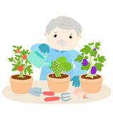 Happy grandfather watering lettuce  Stock Image