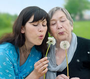 Happy grandmother and granddaughter. Happy grandmother and grand daughter with dandelions Royalty Free Stock Image