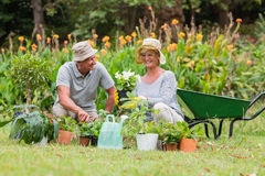 Happy grandmother and grandfather gardening Royalty Free Stock Image