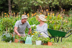 Happy grandmother and grandfather gardening Stock Photos
