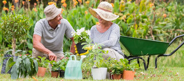Happy grandmother and grandfather gardening royalty free stock photos