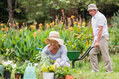 Happy grandmother and grandfather gardening Stock Photo